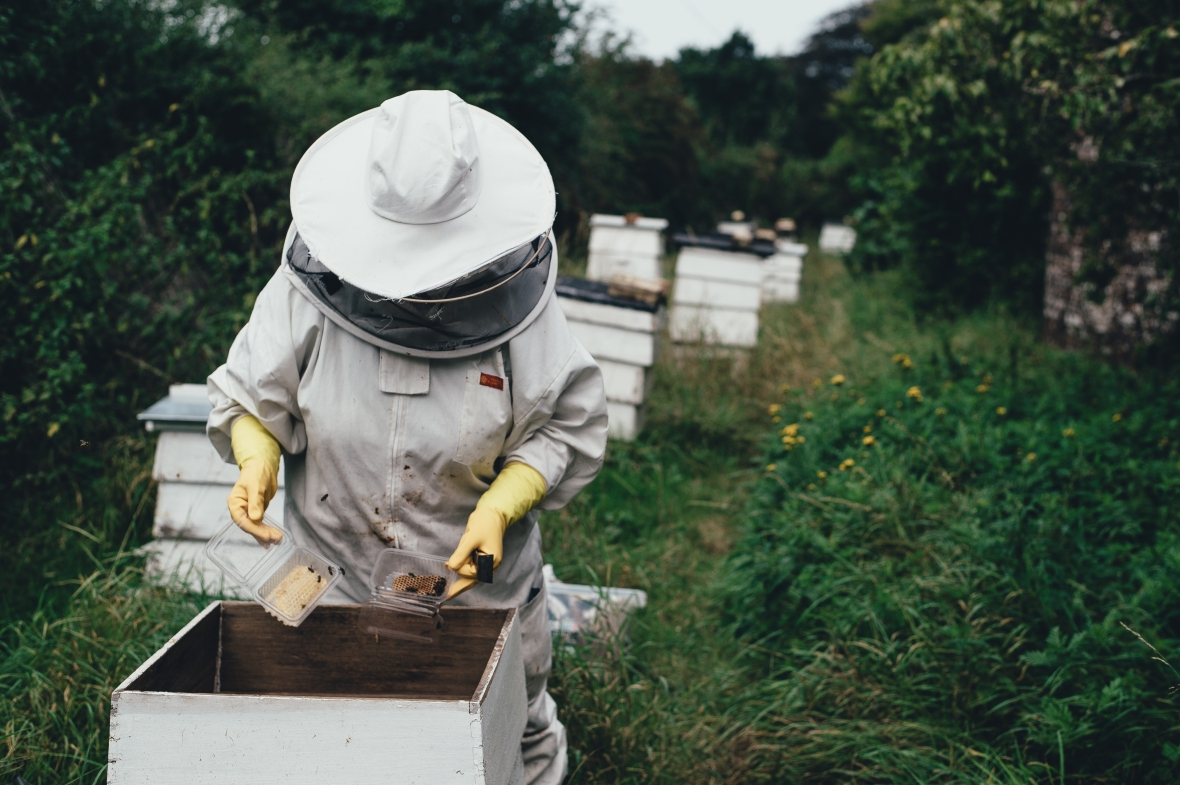 Beekeeper Collecting