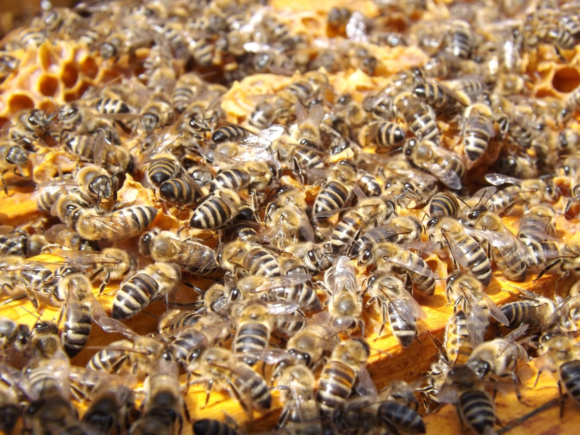 Package Bees